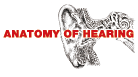 【写真:ANATOMY OF HEARING】